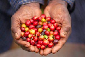 why do we use 100 arabica e1541171210990 300x200 - Coffee
